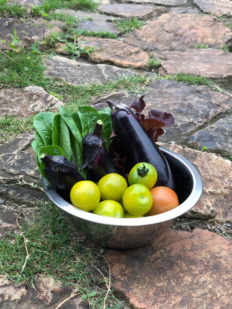 家庭菜園でとれた野菜