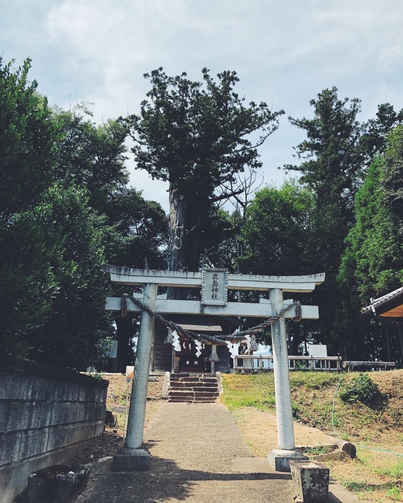 鳥居の先の杉の大木