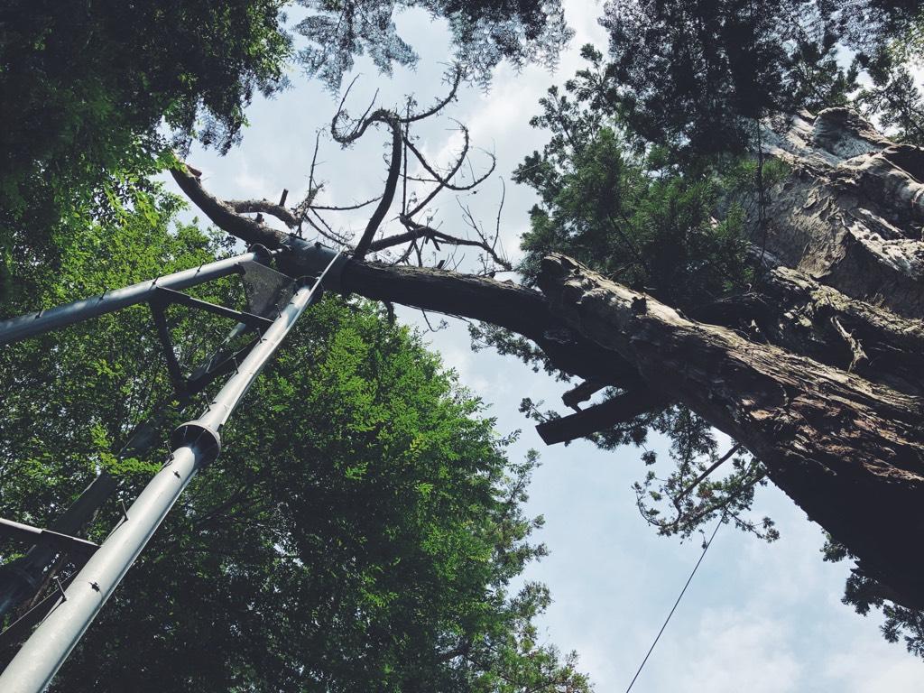 枝を支える3本の鉄骨