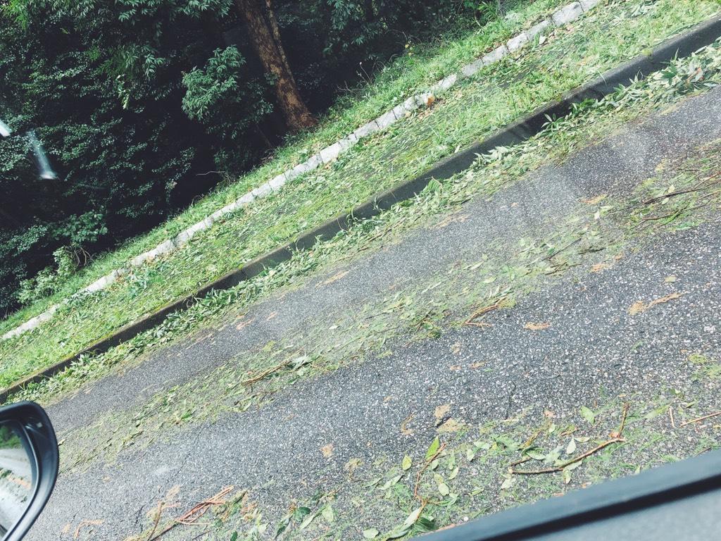 台風後の道路